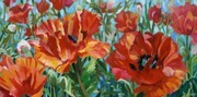 Donna's Poppies